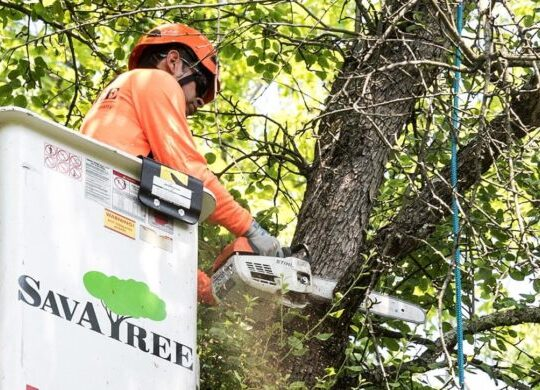 Arborist-Consultations-Shreveport Tree Trimming and Stump Grinding Services-We Offer Tree Trimming Services, Tree Removal, Tree Pruning, Tree Cutting, Residential and Commercial Tree Trimming Services, Storm Damage, Emergency Tree Removal, Land Clearing, Tree Companies, Tree Care Service, Stump Grinding, and we're the Best Tree Trimming Company Near You Guaranteed!