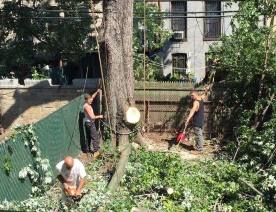Emergency-Tree-Removal-Shreveport Tree Trimming and Stump Grinding Services-We Offer Tree Trimming Services, Tree Removal, Tree Pruning, Tree Cutting, Residential and Commercial Tree Trimming Services, Storm Damage, Emergency Tree Removal, Land Clearing, Tree Companies, Tree Care Service, Stump Grinding, and we're the Best Tree Trimming Company Near You Guaranteed!