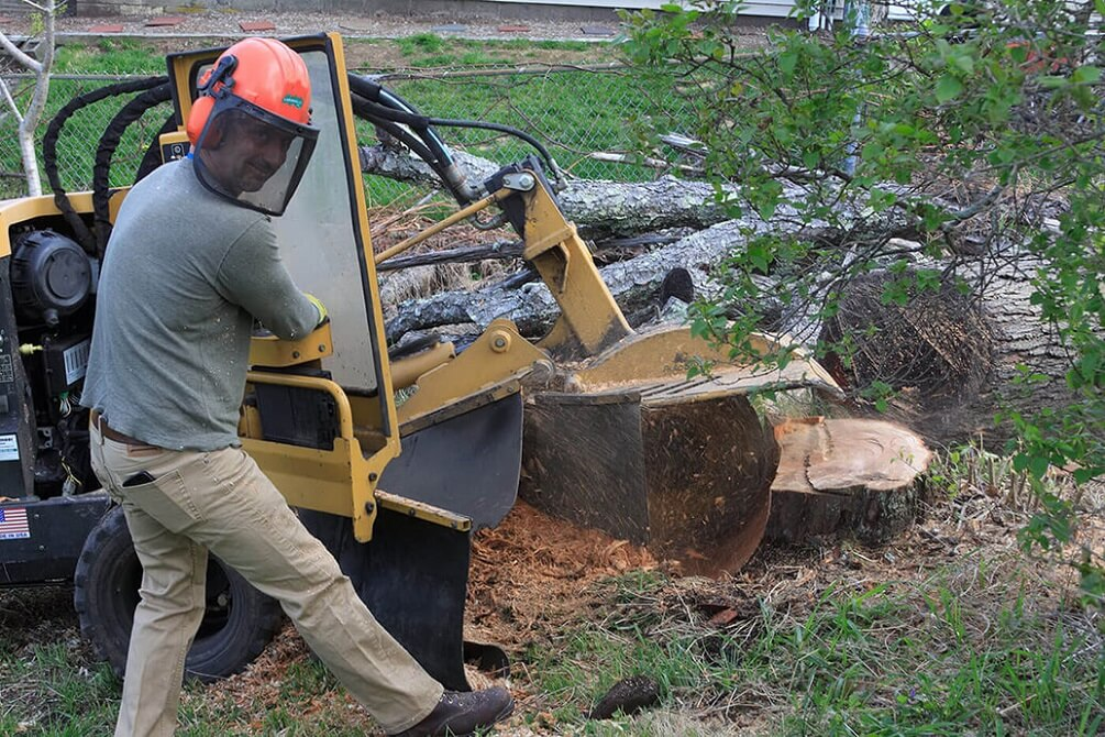 Services-Shreveport Tree Trimming and Stump Grinding Services-We Offer Tree Trimming Services, Tree Removal, Tree Pruning, Tree Cutting, Residential and Commercial Tree Trimming Services, Storm Damage, Emergency Tree Removal, Land Clearing, Tree Companies, Tree Care Service, Stump Grinding, and we're the Best Tree Trimming Company Near You Guaranteed!