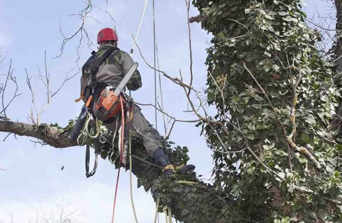 Shreveport Tree Trimming and Stump Grinding Services Header Image-We Offer Tree Trimming Services, Tree Removal, Tree Pruning, Tree Cutting, Residential and Commercial Tree Trimming Services, Storm Damage, Emergency Tree Removal, Land Clearing, Tree Companies, Tree Care Service, Stump Grinding, and we're the Best Tree Trimming Company Near You Guaranteed!