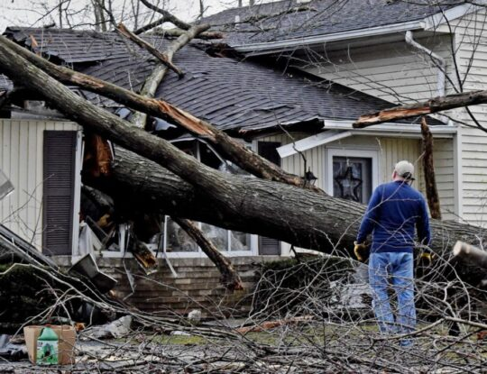 Storm-Damage-Shreveport Tree Trimming and Stump Grinding Services-We Offer Tree Trimming Services, Tree Removal, Tree Pruning, Tree Cutting, Residential and Commercial Tree Trimming Services, Storm Damage, Emergency Tree Removal, Land Clearing, Tree Companies, Tree Care Service, Stump Grinding, and we're the Best Tree Trimming Company Near You Guaranteed!