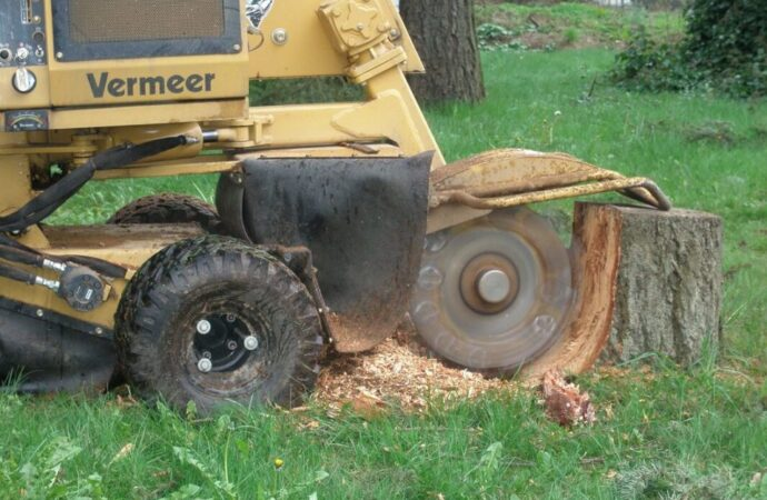 Stump-Grinding-Shreveport Tree Trimming and Stump Grinding Services-We Offer Tree Trimming Services, Tree Removal, Tree Pruning, Tree Cutting, Residential and Commercial Tree Trimming Services, Storm Damage, Emergency Tree Removal, Land Clearing, Tree Companies, Tree Care Service, Stump Grinding, and we're the Best Tree Trimming Company Near You Guaranteed!