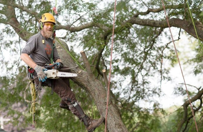 Tree-Cutting-Shreveport Tree Trimming and Stump Grinding Services-We Offer Tree Trimming Services, Tree Removal, Tree Pruning, Tree Cutting, Residential and Commercial Tree Trimming Services, Storm Damage, Emergency Tree Removal, Land Clearing, Tree Companies, Tree Care Service, Stump Grinding, and we're the Best Tree Trimming Company Near You Guaranteed!