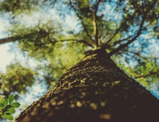 Tree-Healthcare-Shreveport Tree Trimming and Stump Grinding Services-We Offer Tree Trimming Services, Tree Removal, Tree Pruning, Tree Cutting, Residential and Commercial Tree Trimming Services, Storm Damage, Emergency Tree Removal, Land Clearing, Tree Companies, Tree Care Service, Stump Grinding, and we're the Best Tree Trimming Company Near You Guaranteed!