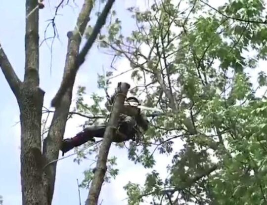 Tree-Removal-Shreveport Tree Trimming and Stump Grinding Services-We Offer Tree Trimming Services, Tree Removal, Tree Pruning, Tree Cutting, Residential and Commercial Tree Trimming Services, Storm Damage, Emergency Tree Removal, Land Clearing, Tree Companies, Tree Care Service, Stump Grinding, and we're the Best Tree Trimming Company Near You Guaranteed!