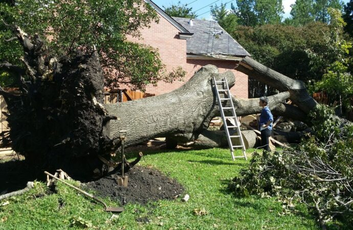 Bossier City-Shreveport Tree Trimming and Stump Grinding Services-We Offer Tree Trimming Services, Tree Removal, Tree Pruning, Tree Cutting, Residential and Commercial Tree Trimming Services, Storm Damage, Emergency Tree Removal, Land Clearing, Tree Companies, Tree Care Service, Stump Grinding, and we're the Best Tree Trimming Company Near You Guaranteed!