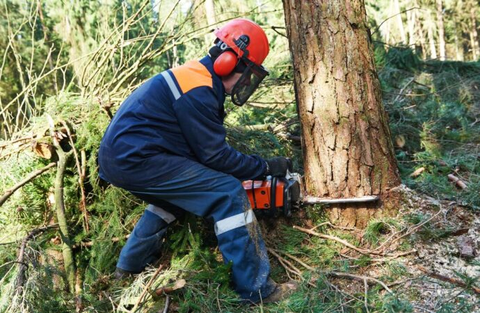 Taylortown-Shreveport Tree Trimming and Stump Grinding Services-We Offer Tree Trimming Services, Tree Removal, Tree Pruning, Tree Cutting, Residential and Commercial Tree Trimming Services, Storm Damage, Emergency Tree Removal, Land Clearing, Tree Companies, Tree Care Service, Stump Grinding, and we're the Best Tree Trimming Company Near You Guaranteed!