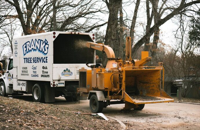 Willow Chute-Shreveport Tree Trimming and Stump Grinding Services-We Offer Tree Trimming Services, Tree Removal, Tree Pruning, Tree Cutting, Residential and Commercial Tree Trimming Services, Storm Damage, Emergency Tree Removal, Land Clearing, Tree Companies, Tree Care Service, Stump Grinding, and we're the Best Tree Trimming Company Near You Guaranteed!